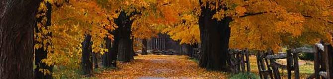 autunno_albero
