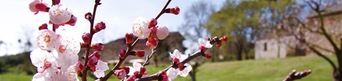 primavera_fiori