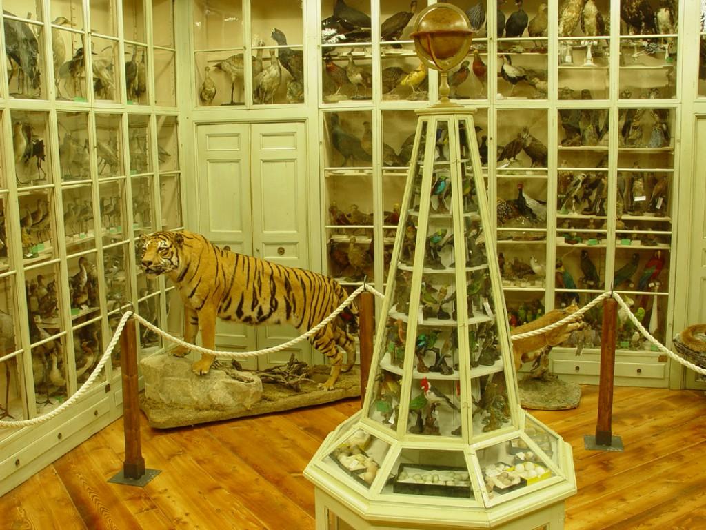 museo craveri_Sala Antica Collezioni Ornitologiche