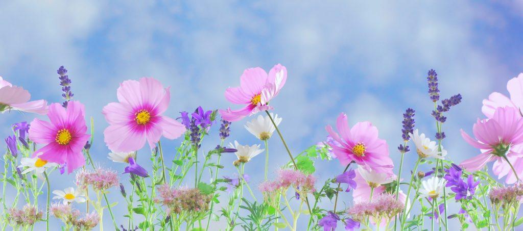 primavera fiori_foto pexel.com